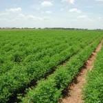 Compartimentul Registrul Agricol