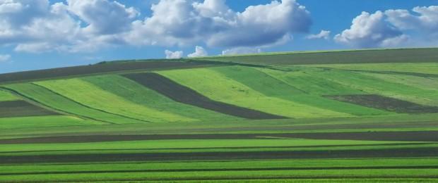 terenuri1